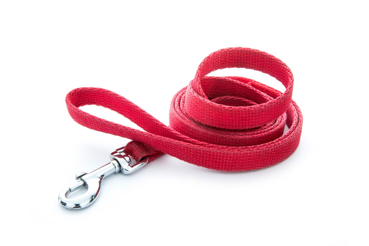 Nylon-collars-and-leashes