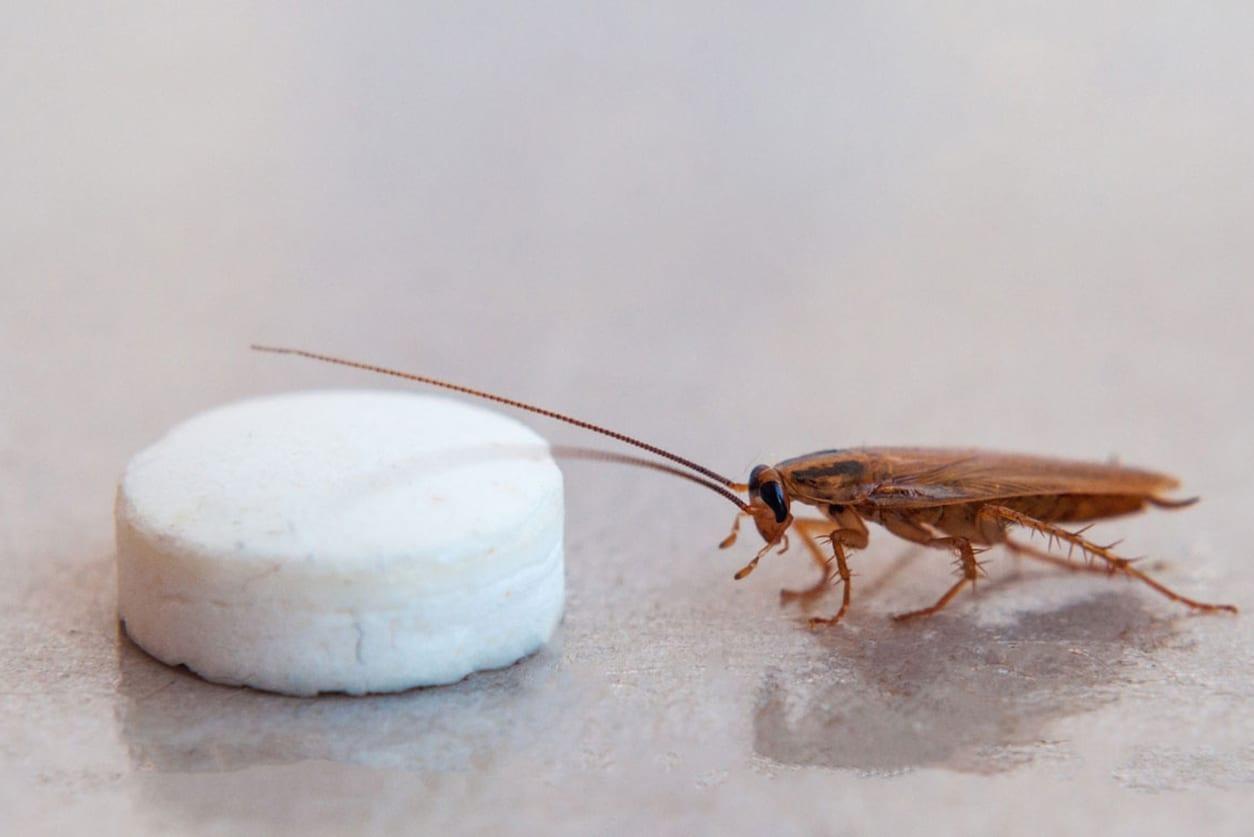 Roach-Bait