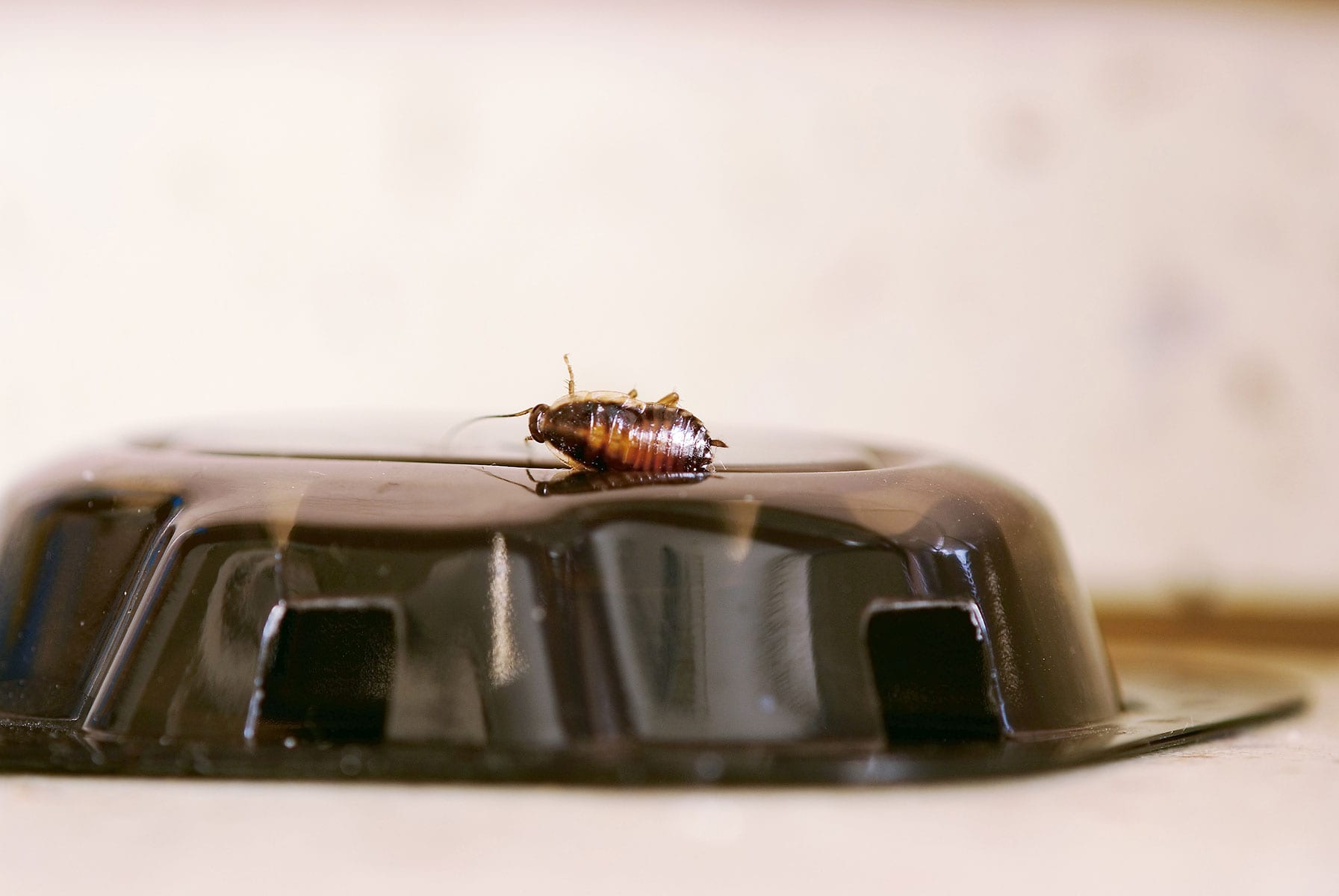 Roach-Traps