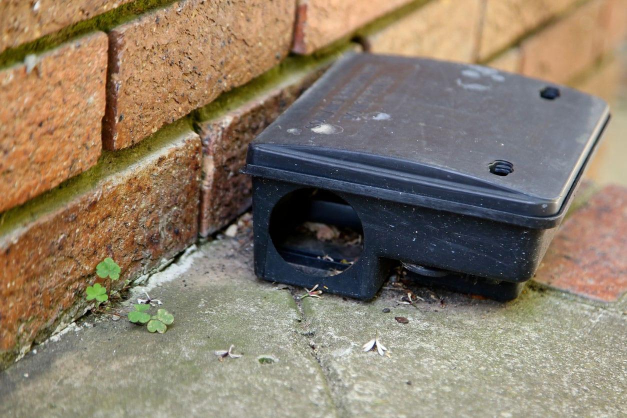 rat-box-3